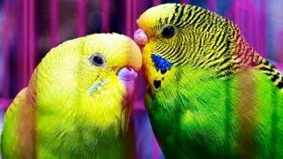 How to Determine a Bird's Sex   Pet Bird