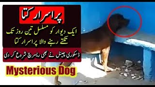 Mysterious Dog - Discovery Channel Also Started Research - Urdu & Hindi Purisrar Dunya