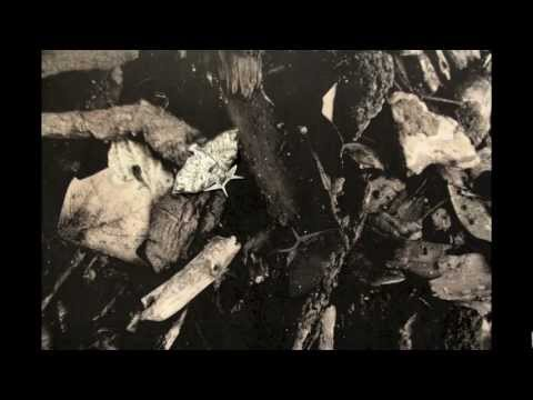 Peppered Moth Natural Selection Animation