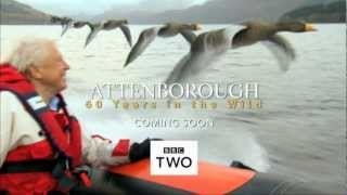 Attenborough: 60 Years in the Wild - Trailer - BBC Two