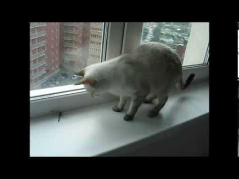 Кошка, котёнок и стрекоза - Funny Cats! -