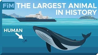 The Incredible Scale of Blue Whales - Visualized
