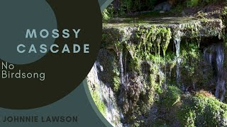 Forest Waterfall Nature Sounds W O Birds Singing Relaxing Soothing Sound Of Water Meditation