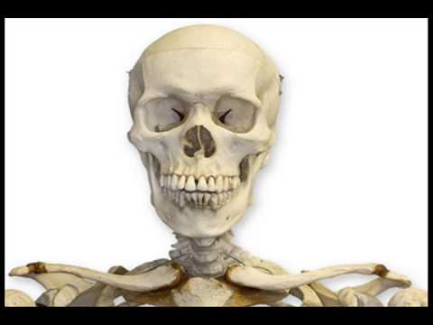 Removed From Woman Body 38 Year Old Skeleton