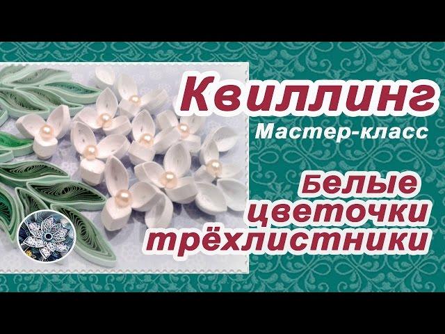 ✽►Квиллинг цветы✽Белые цветы трёхлистники◄✽