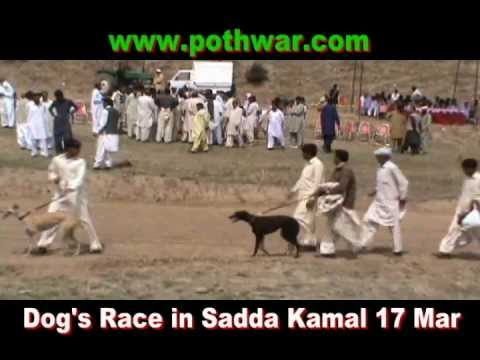 Dog's Race in Sadda Kamal 17 Mar 2012