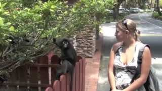Girl shocked by monkey attack