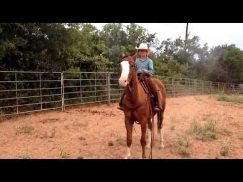Trace Barrett (7). shooting the blank guns from his 4 year old pony  (Dudley) for the first time.