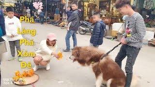 Mật đi chợ xuân gây cười khắp chợ vì quá đáng yêu cùng Cò và Mai - Mật Pet Family