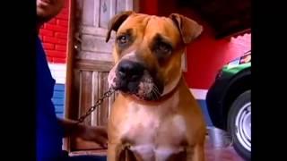Cachorra impede ação de golpista em revendedora de gás no Paraná