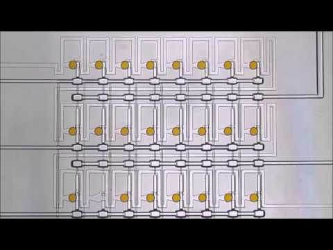On-chip analysis, indexing and screening for chemical producing bacteria in microfluidic static...