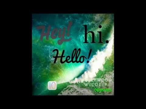 Hey Hi Hello- Hollywood Wildlife (Cover)