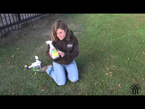 Lawn Weed Control - Creeping Charlie in Lawns - Mickman Brothers Landscape Maintenance
