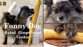 Funny dog baked  gingerbread cookie