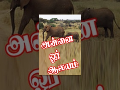 Annai Oru Aalayam video