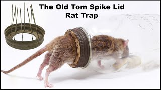 The Old Tom Spike Lid Rat Trap Fail. Mousetrap Monday