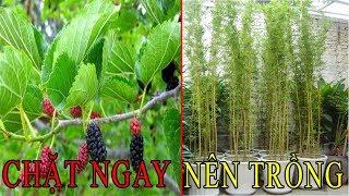 Tán Gia Bại Sản nếu trước cổng nhà trồng cây này - Chặt ngay để thay  bằng những cây hút tài lộc sau