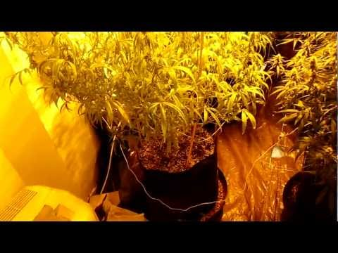 Organic Compost Tea Ingredients For My Medical Marijuana Plants Part 1