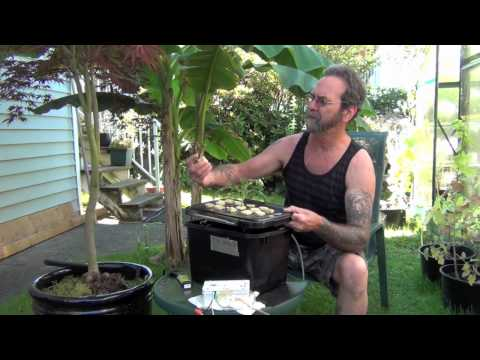 Hydroponic Greenhouse Project,  Cloning A No Hassle 99 Percent Success Rate.mov