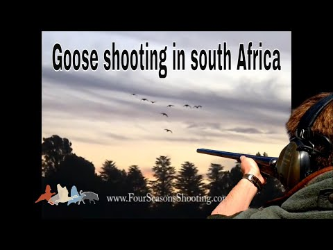 Goose shooting (South Africa )-£170 per day inc acc 2014 Kuwait Saudi Arabia Lebanon