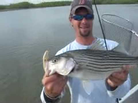 The best lake whitney striper fishing youtube for Lake whitney fishing guide