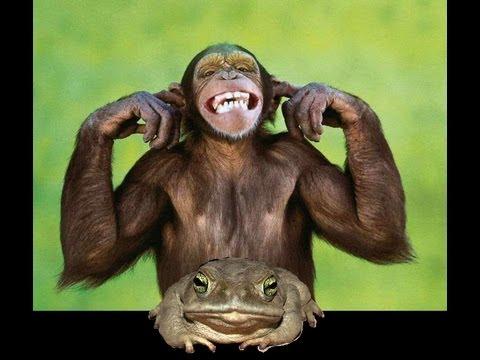 Chimp makes frog suck him off