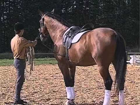Equitation : Galop 7 - Cheval