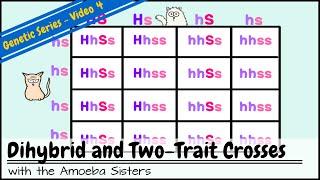 Dihybrid cross worksheet guinea pigs answers