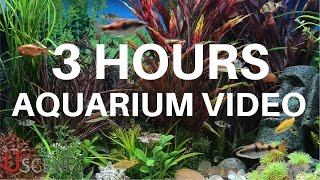3 Hour Aquarium Video by Uscenes: FREE TV SCREENSAVER