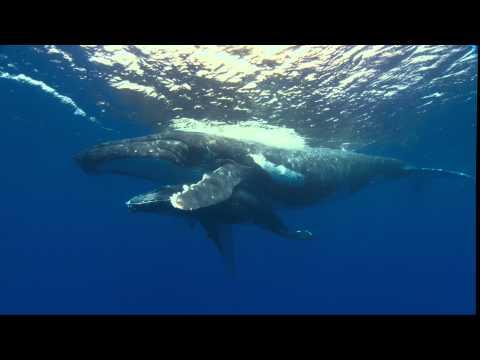 Ocean Voyagers 3D Trailer - Feo Pitcairn