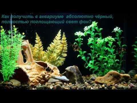 Чёрный светопоглощающий задний фон в аквариуме