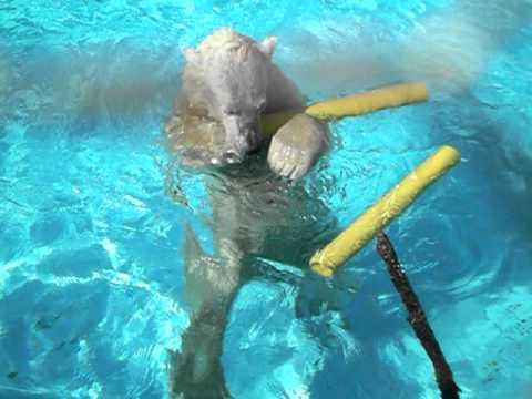 プールではじけるキロル 2011/3/13 浜松市動物園