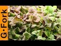 Grow Lettuce, Mesclun, & Salad Greens How To :…