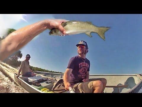 Cast Net Fishing Tampa Bay Flats