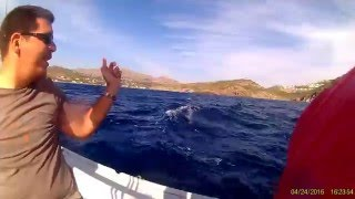 Sailing with Dolphins at Bodrum | Bodrum