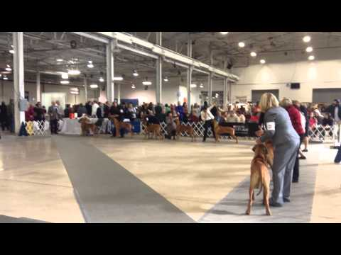 National Dog Show Philadelphia  Youtube