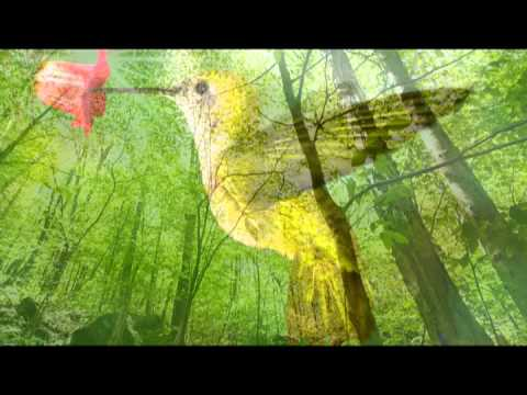 Bird Sounds: One Hour Nature Sounds Music for Meditation and Relax, Massage and Autogenic Training Music Videos