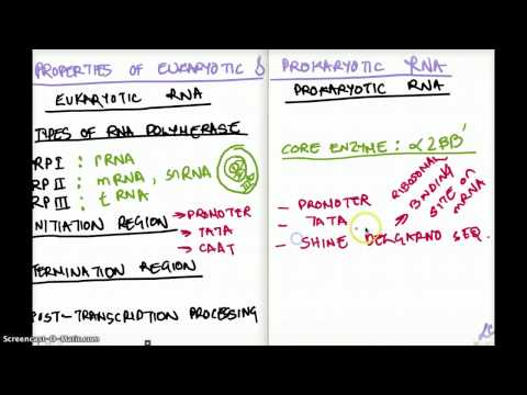 Properties of Eukaryotic and Prokaryotic RNA