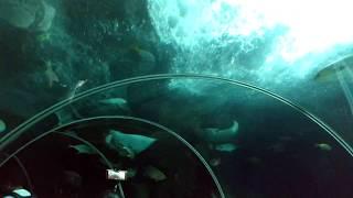 Underwater Aquarium   Sentosa Island   Singapore