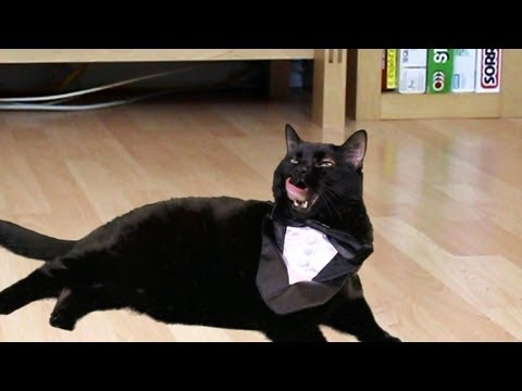 N2 The Talking Cat - Preppy Kitty Style (psy Oppa Gangnam Style Parody) video