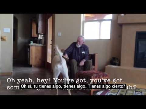 Impresionante la conexión de un perro con su amo con alzheimer