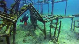 GoPro: Scuba Diving in Tioman Island