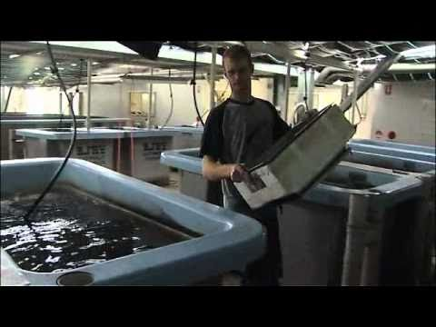 Nick Arena - Innovation in the NSW aquaculture industry