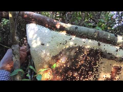 Rafter Beekeeping--Cambodian-style!