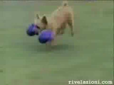 Video Divertenti – Cani pazzi