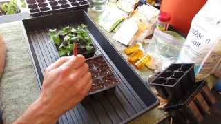 For New Gardeners: How to Start/Plant Pepper Seeds Indoors for Transplants - MFG 2014