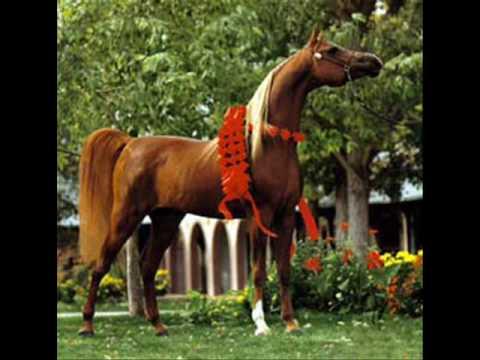 Konie Arabskie