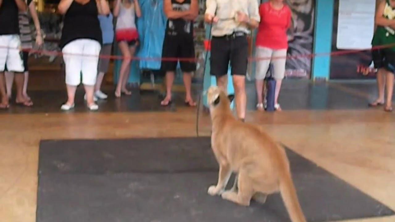 Cougar s Huge Leap In ...