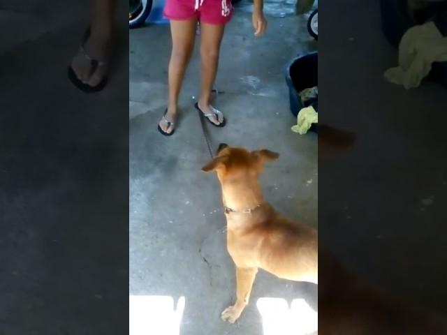 Le chien débile