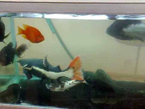 Circulador de agua para aquario